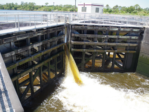 Water from the St. Lucie Lock pouring in
