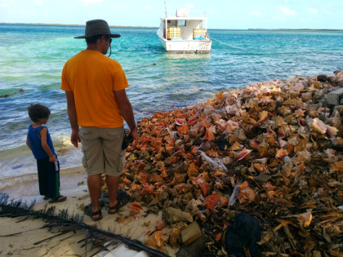 All along Kings Highway were huge piles of discarded conch shells. One man's trash is another's treasure I suppose.